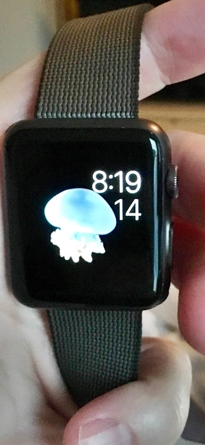 Holding the Apple Watch, display of time